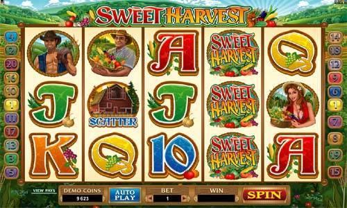 Sweet Harvest Videoslot Screenshot