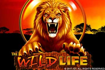 william hill online casino slot book of ra free